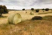Sonra hasat saman balya — Stok fotoğraf