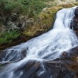 Stock Photo: Waterfall in stream of yews