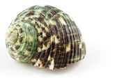 Seashell on white background — Stock Photo