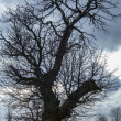 Stock Photo: Leafless tree against light