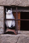 Stray cat on an old window — Stock Photo