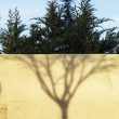 Stock Photo: Shadow of leafless tree