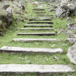 Stock Photo: Wooden steps in the grass