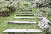 Wooden steps in the grass — Stock Photo
