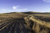 Fallow grain fields — Stock Photo