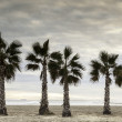 Stock Photo: Palm trees by the sea