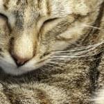 Sleeping kitten — Stock Photo #37822201