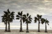 Palme sul mare — Foto Stock