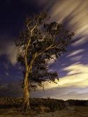 Night shot of a singular tree — Stock Photo