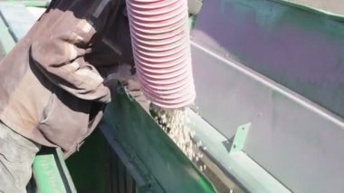 Pea grains is poured into drill — Stockvideo