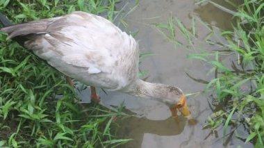 Stork in creek — Stockvideo
