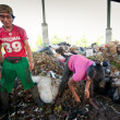 Постер, плакат: Poor from Java island working in a scavenging at the dump on Bali Indonesia