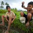 Stock Photo: Poor children catch small fish in ditch near rice field