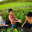 Poor kid catches small fish in a ditch near a rice field — Stock Photo #13156487