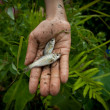Poor kid catches small fish in a ditch near a rice field — Stockfoto