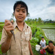 Poor kid catches small fish in a ditch near a rice field - Stock Photo