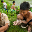 Poor kid catches small fish in a ditch near a rice field — Stock Photo #13156617