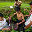 Poor kid catches small fish in a ditch near a rice field — ストック写真