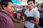 Briga de galos balinesa tradicional — Foto Stock