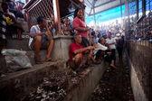 Peleas de gallos tradicional balinesa — Foto de Stock