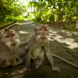 un singe sauvage sur bali — Photo #13440322