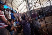 Under balinesiska traditionell tuppfäktning konkurrens — Stockfoto