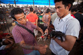 во время конкурса балийской традиционной петушиные бои — Стоковое фото