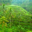 Terrace rice fields on Bali, Indonesia. — Stockfoto