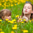 Stockfoto: Sisters blowing dandelion seeds away in the meadow