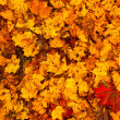 Beautiful autumn leaves (for background) — Stock Photo
