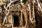 Angkor to największy kompleks świątyni hinduskiej i największym zabytkiem religijnym na świecie. — Zdjęcie stockowe