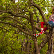 Funny lovely little girl posing sitting on a tree in the garden — Stock Photo #19065705