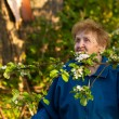 An elderly woman in a tracksuit standing in the park and smelling the flowers of apple — Stock fotografie