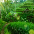 Tropical valley with amazing balinese rice terraces and trees, Indonesia. - Stock Photo