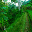 Terrace rice fields, Bali, Indonesia — Stockfoto
