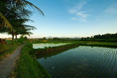 Rice terraces at sunrises in Ubud on Bali island, Indonesia. — Stock Photo