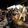 BALI, INDONESIA APRIL 11: Poor from Java island working in a scavenging at the dump on April 11, 2012 on Bali, Indonesia. Bali daily produced 10,000 cubic meters of waste. - Stock Photo