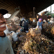 BALI, INDONESIA be- APRIL 11: Poor from Java island working in a scavenging at the dump on April 11, 2012 on Bali, Indonesia. Bali daily produced 10,000 cubic meters of waste. — Foto de Stock