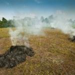 バリ島フィールドにわらのヒープを燃焼 — ストック写真