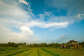 Farm in ubad surroundings and blue sky, Bali island, Indonesia. — Stock Photo