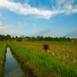 Farm in Ubud surroundings, Bali island, Indonesia. — ストック写真