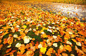 Beautiful autumn leaves for background. — Stock Photo