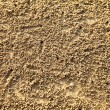 Stock Photo: Texture of sea sand, with a small crab moves.