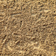 Texture of sea sand, with a small crab moves. - Stock Photo