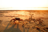 Crab on the coast sea — Stock Photo