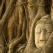 Stock Photo: BuddhHead in roots of tree, Ayutthaya, Thailand.
