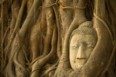 Buddha Head in the roots of the tree, Ayutthaya, Thailand. — Stock Photo