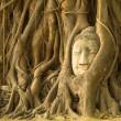 The Head of Buddha in Wat Mahathat, Ayutthaya, Thailand — Stock Photo