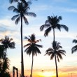 Sunset at a beach resort in the tropics — Stock Photo #23061208