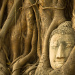 Buddha Head in the roots of the tree, Ayutthaya, Thailand. — Stock Photo #23061230